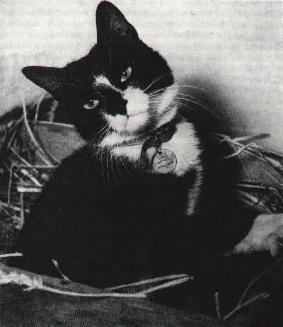 Able Sea-Cat Simon